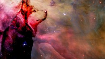 Outer space stars dogs husky siberian wallpaper