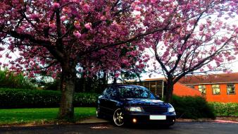 Cars turbo volkswagen passat vw 3b flowered trees wallpaper