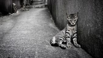 Cats animals monochrome egyptian mau wallpaper