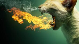 Cats fire smoke flame breath wallpaper