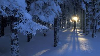 Dawn forests landscapes seasons snow wallpaper