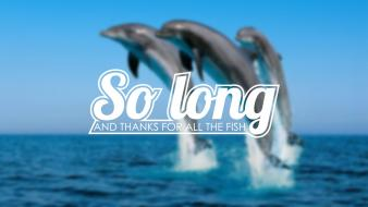 Fish typography dolphins hitchhikers guide to the galaxy Wallpaper
