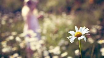 Flowers bokeh white blurred background daisies wallpaper