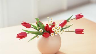 Flowers tulips lifestyle wallpaper
