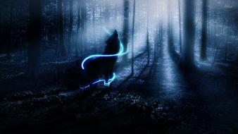 Forests wolves wallpaper
