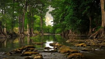 Green landscapes nature trees wallpaper