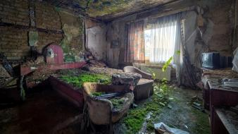 Green room interior abandoned house growing Wallpaper