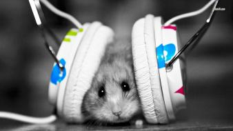 Headphones music animals funny dubstep mice wallpaper
