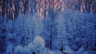 Ice snow trees frost Wallpaper