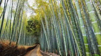Japan forest bamboo kyoto wallpaper
