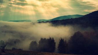 Landscapes nature trees fog mist sunlight bieszczady wallpaper