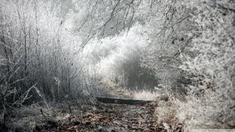 Landscapes nature winter trees path Wallpaper
