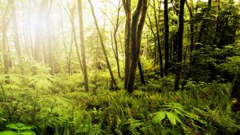 Nature forests sunlight wallpaper
