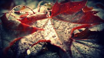 Rain leaves timeline water drops cover fallen wallpaper
