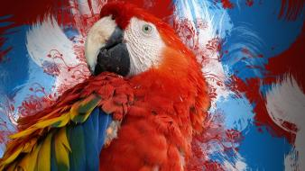 Red birds tropical parrots scarlet macaws wallpaper