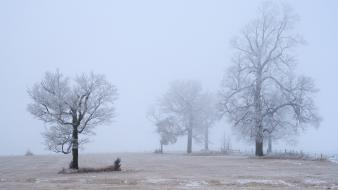 Snow trees fields fog mist usa minnesota wallpaper