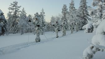 2008 scandinavia skiing finnish armed forces forest wallpaper