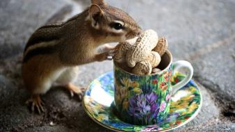 Animals food cups peanuts chipmunks eating wallpaper