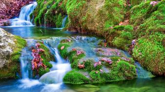 Flora rivers wallpaper