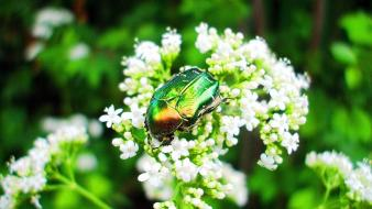 Flowers insects beetles white blurred background Wallpaper
