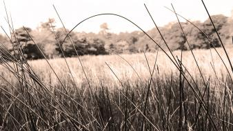 Landscapes minimalistic grass fields sepia countryside grassland wallpaper