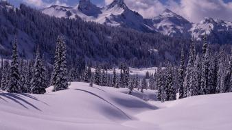 Landscapes winter snow wallpaper