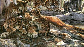 Nature family animals puma wild mountain lions cougar Wallpaper