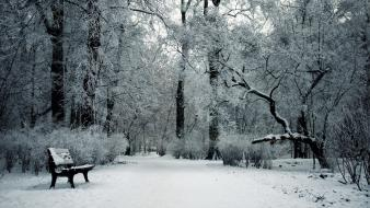 Snow trees bench parks wallpaper