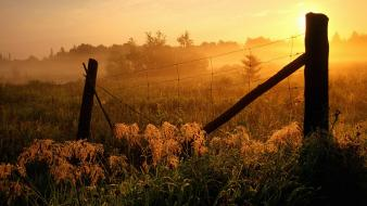 Sunrise nature fog wallpaper