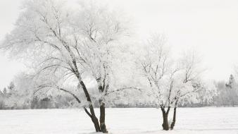 Trees white cold earth frost tree skies wallpaper