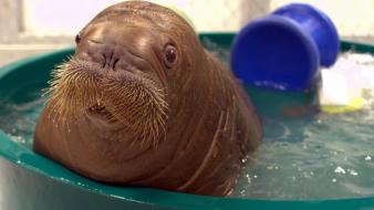 Water animals walrus baby tub wallpaper