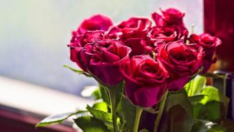 Beautiful roses pictures Wallpaper