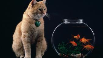 Cats animals goldfish fish bowls wallpaper