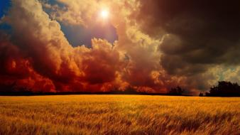 Clouds storm wheat wallpaper