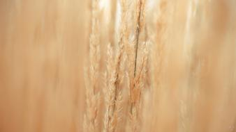 Depth of field stem warm colors smooth wallpaper