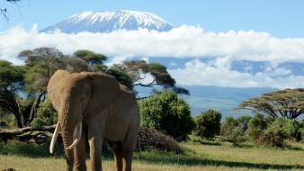 Elephants mount kilimanjaro wallpaper