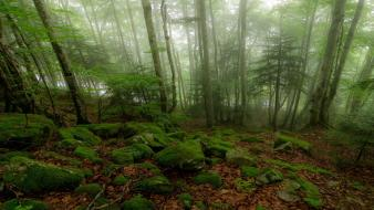 Forests brown fog mist foam moss grove Wallpaper