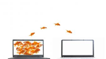 Funny jumping goldfish laptops white background screens wallpaper