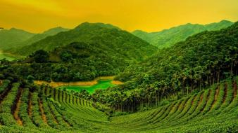 Green landscapes plantation bing wallpaper