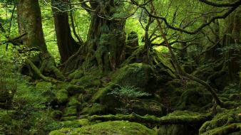Green nature trees wood outdoors moss forest wallpaper