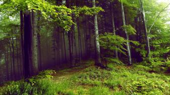 Green trees dark forests mysterious wallpaper