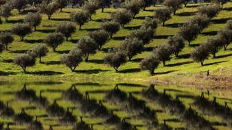 Landscapes trees portugal lakes reflections fruit wallpaper