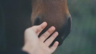 Nature animals hands horses body parts wallpaper