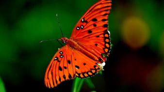 Orange insects dots butterfly blurred background butterflies wallpaper