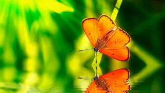 Orange insects wildlife reflections blurred background butterflies wallpaper