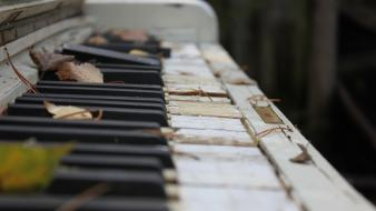 Piano abandoned fallen leaves wallpaper