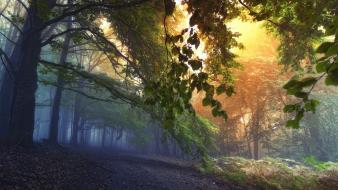 Sacred mystical dawning autumn leaves forest path wallpaper