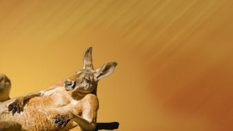 Tanlines cigarettes wink squint smoker kangaroos chill wallpaper