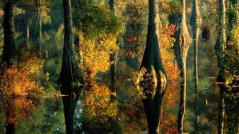 Trees ponds cypress reflections delaware bing wallpaper