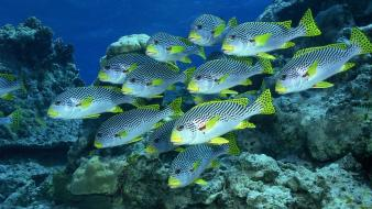 Animals fish underwater fishes wallpaper
